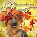 Самые добрые открытки на осень