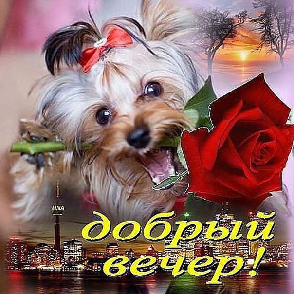Путин, открытка веселого вечера