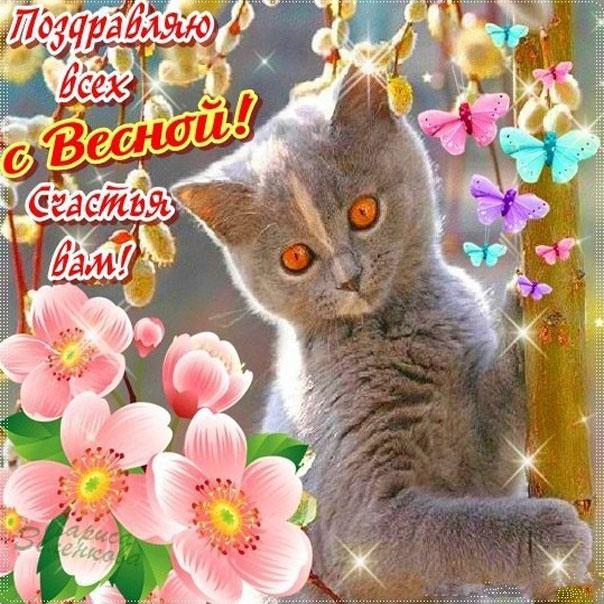 С весной котик на картинке