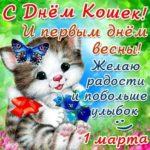 Картинки день кошек день весны