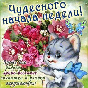 Картинки чудесного начала недели. Цветы, надпись, котенок, с текстом открытки