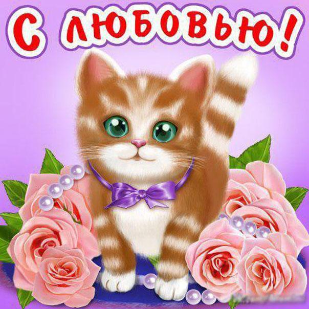 Открытки я тебя люблю котик