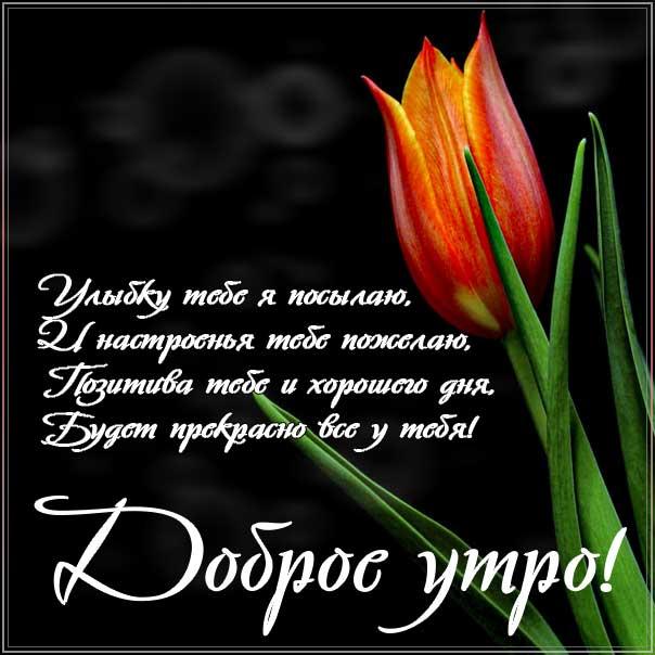 доброе утро, с добрым утром, утренняя улыбка, чудесного настроения, про утро картинка, утро с тюльпанами, приветствие утреннее